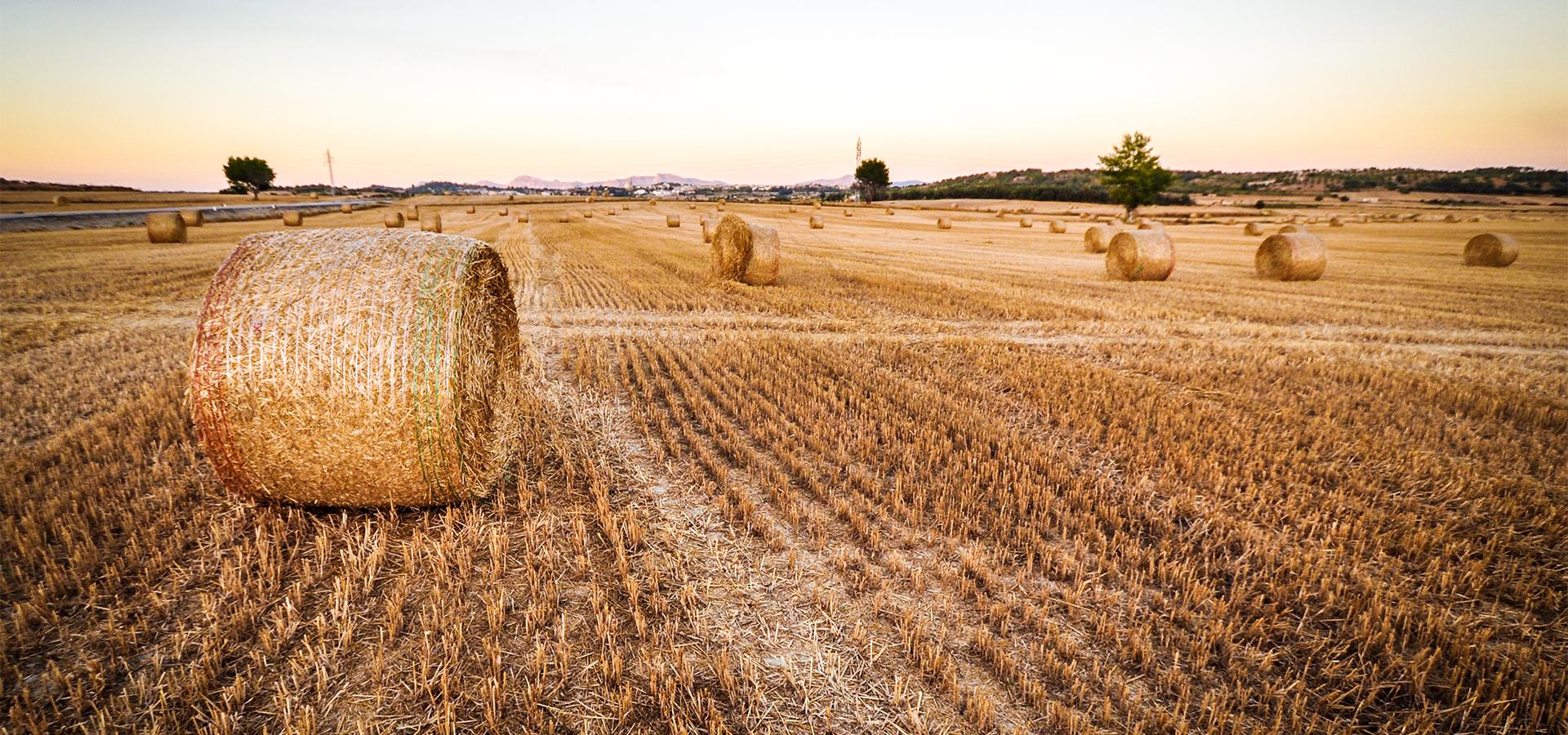 AGCI - Agricoltura